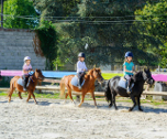 Equitation poney-Saint-Germain-en-Laye ( Ile de France et Centre) 4 jours