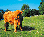 Highlands and Islands- Ecosse( Europe du Nord) 8 jours